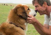 latest movies for dog lovers